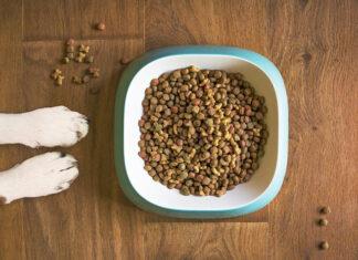 Jakie są karmy dla zwierząt